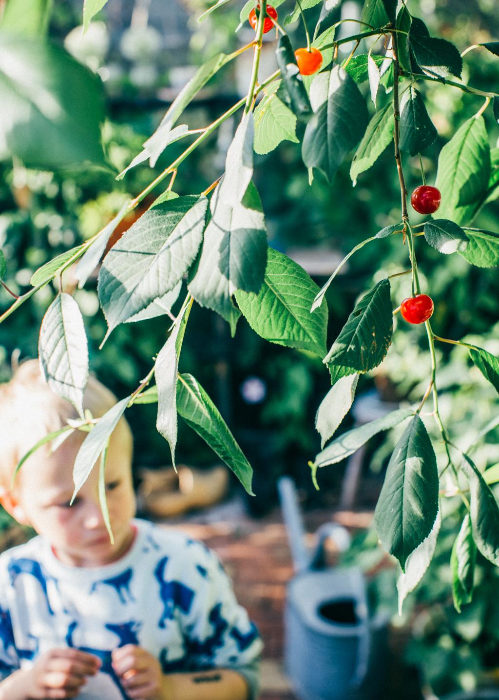 ship_garden_sommar_kristin lagerqvist-5863