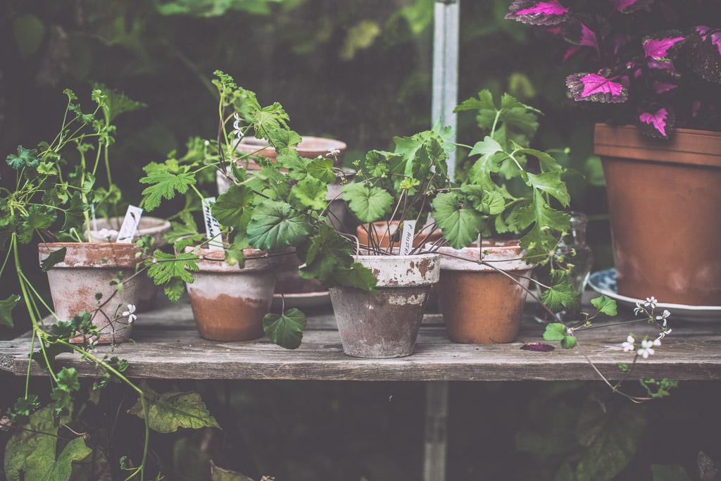 gardenhouse_kristin lagerqvist-0262
