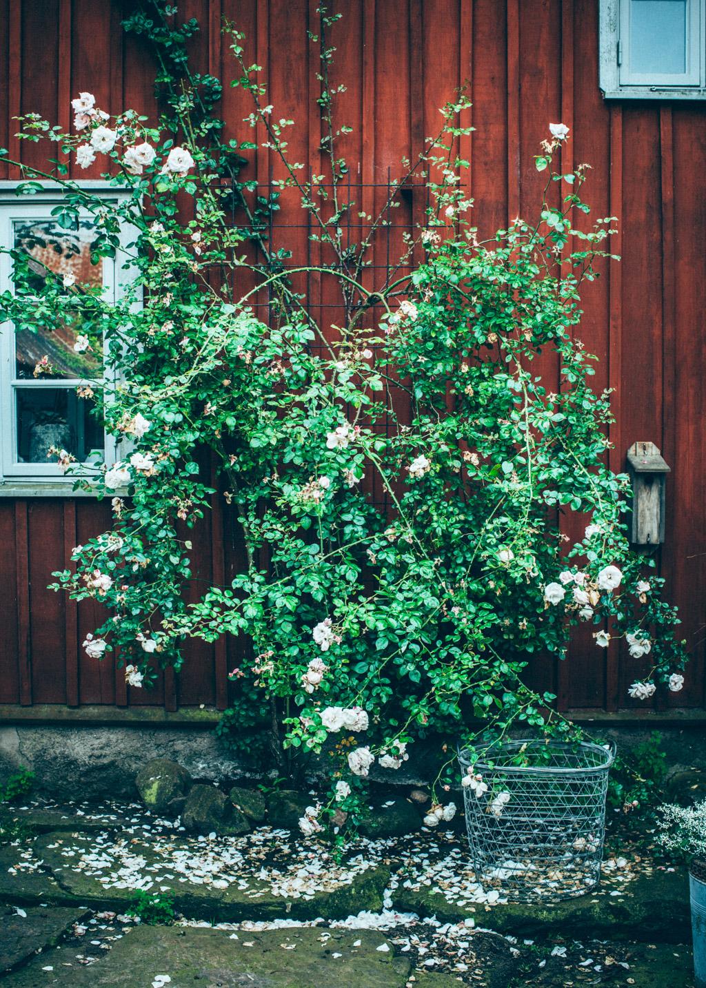 hakesgard2_web_kristin lagerqvist-8943