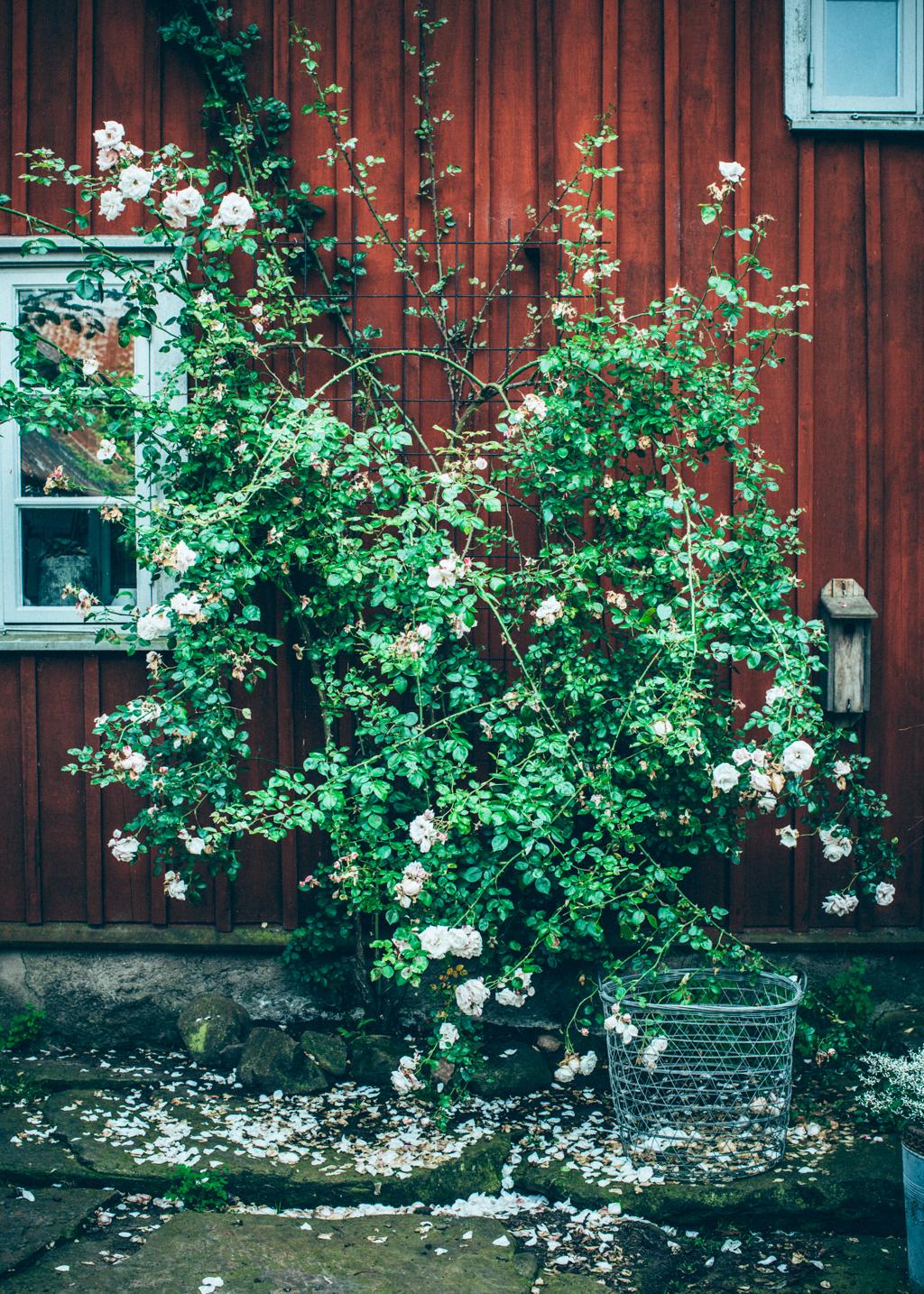 marie2_kristin lagerqvist-8943