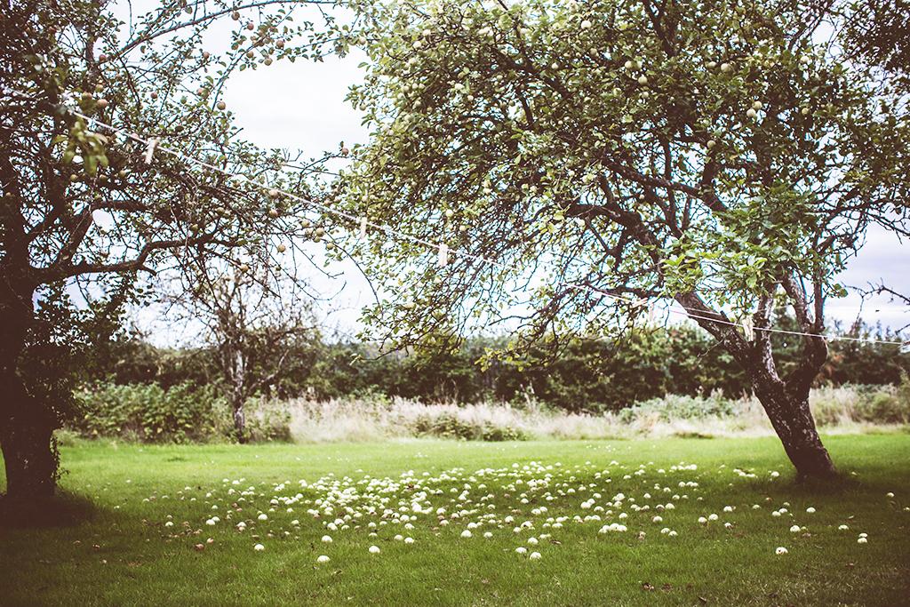 Lovelylife_apples_krickelin-8325-kopia-2