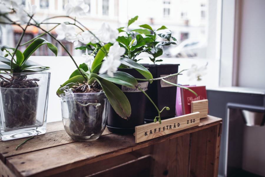 blogg_koppi_JOhanna_Kristin_lagerqvist-3621