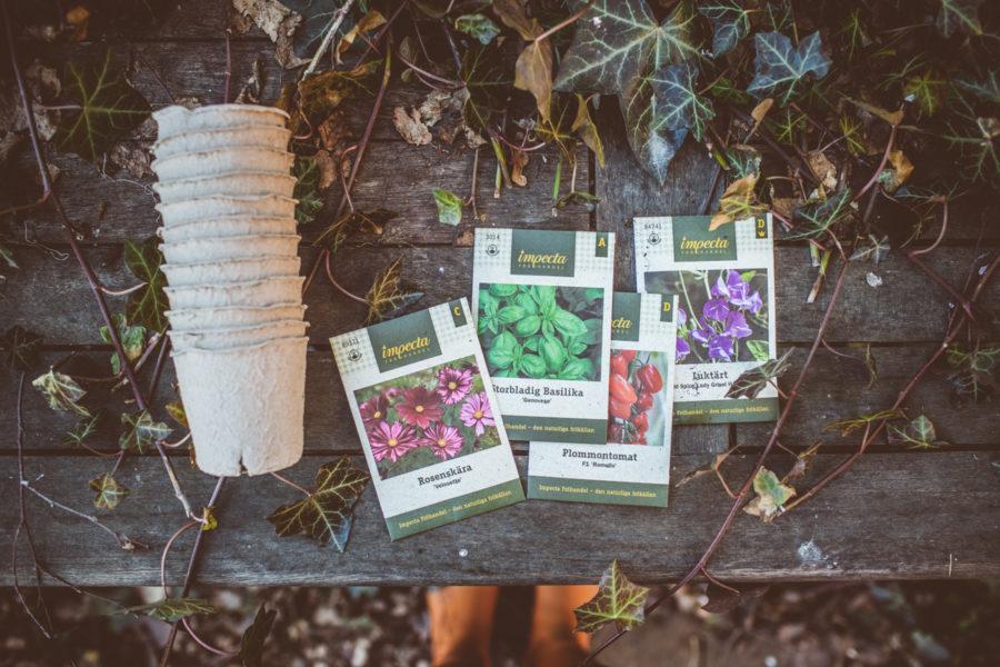 garden_Kristin_lagerqvist-4785