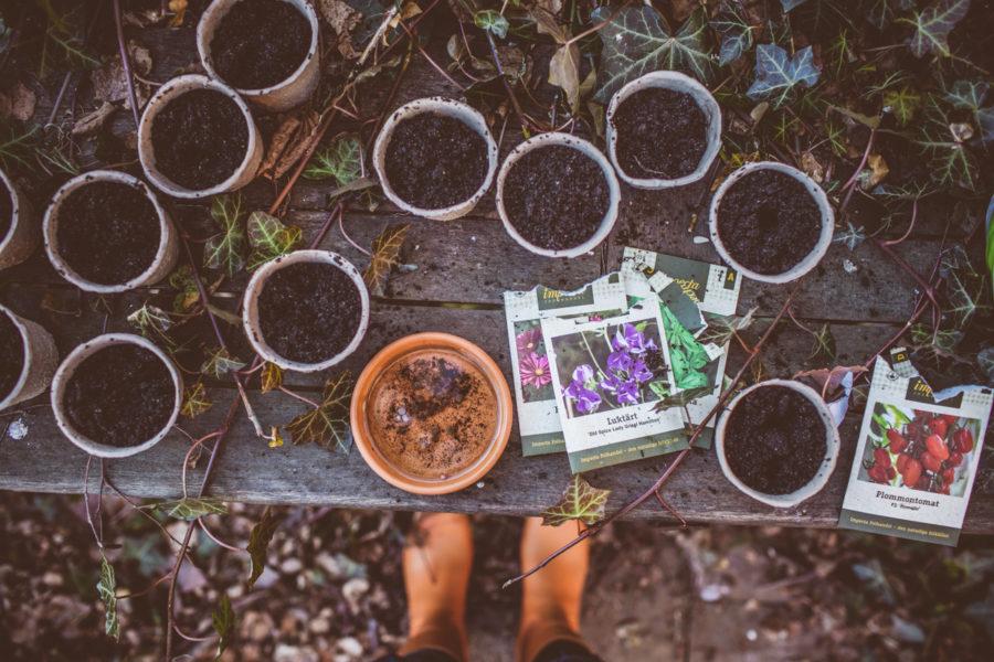garden_Kristin_lagerqvist-4791