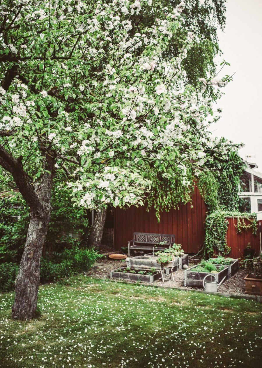 friday garden__Lagerqvist-8746