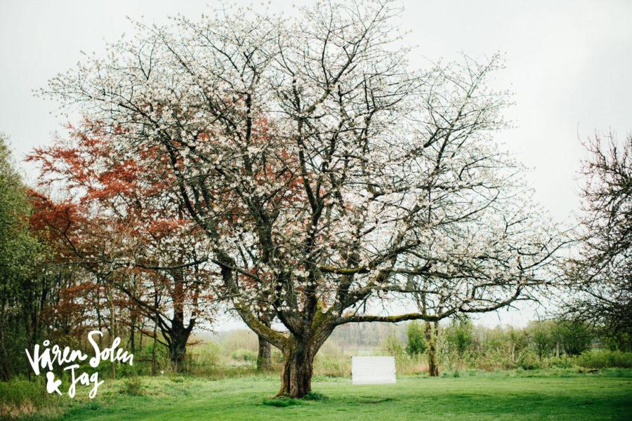 vårensolenochjag