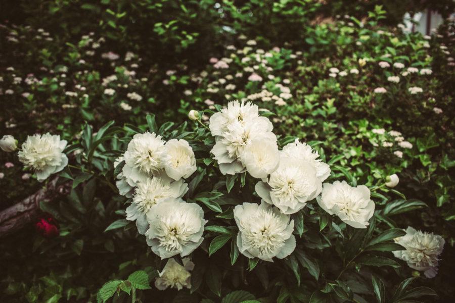 flowers__Lagerqvist-0165