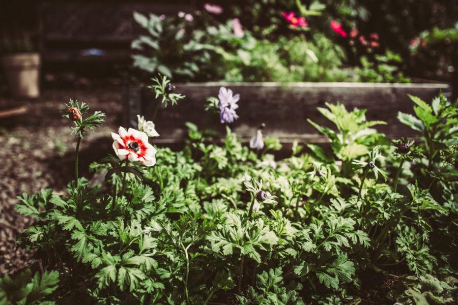 garden prints__Lagerqvist-0501