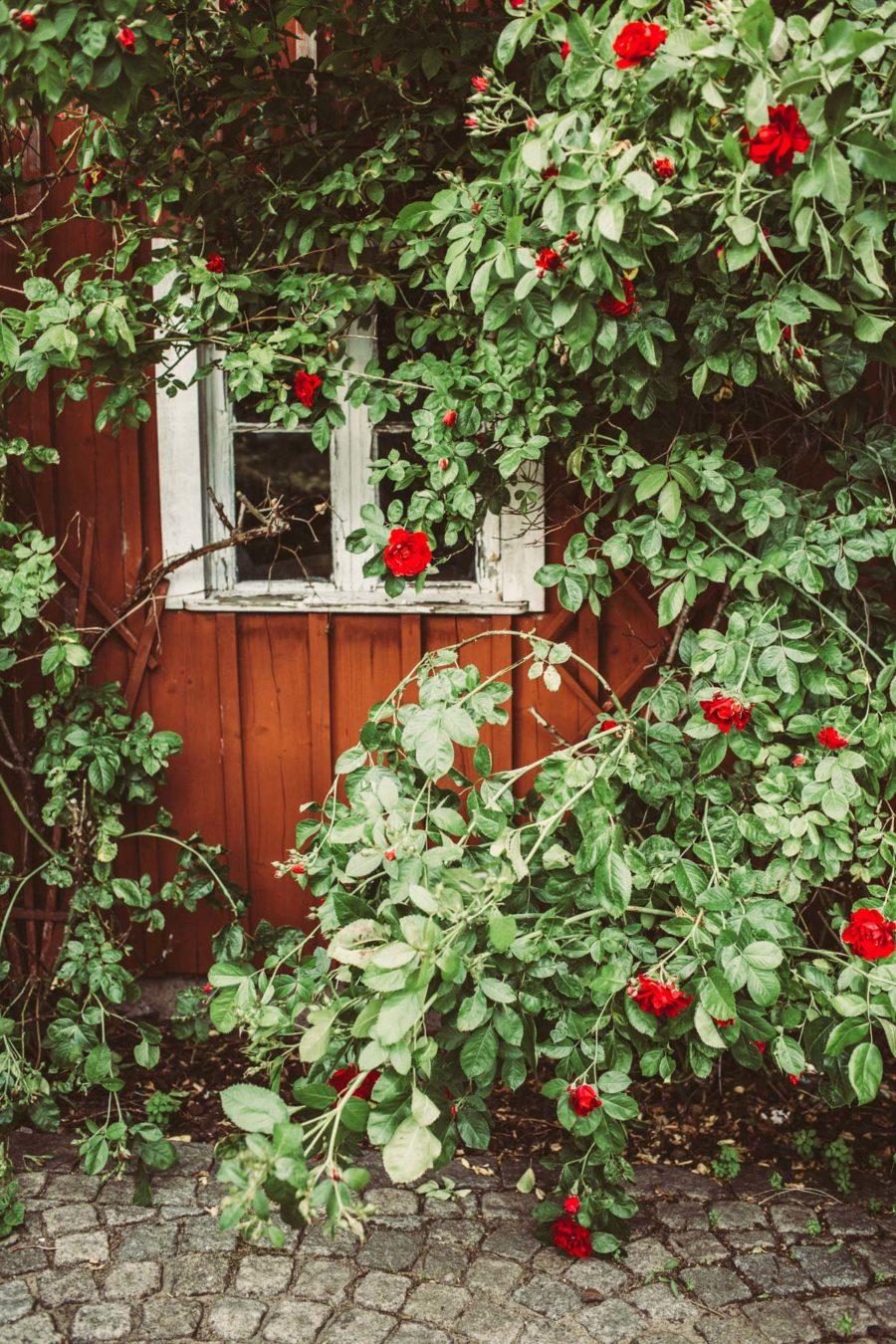 garden__Lagerqvist-0410