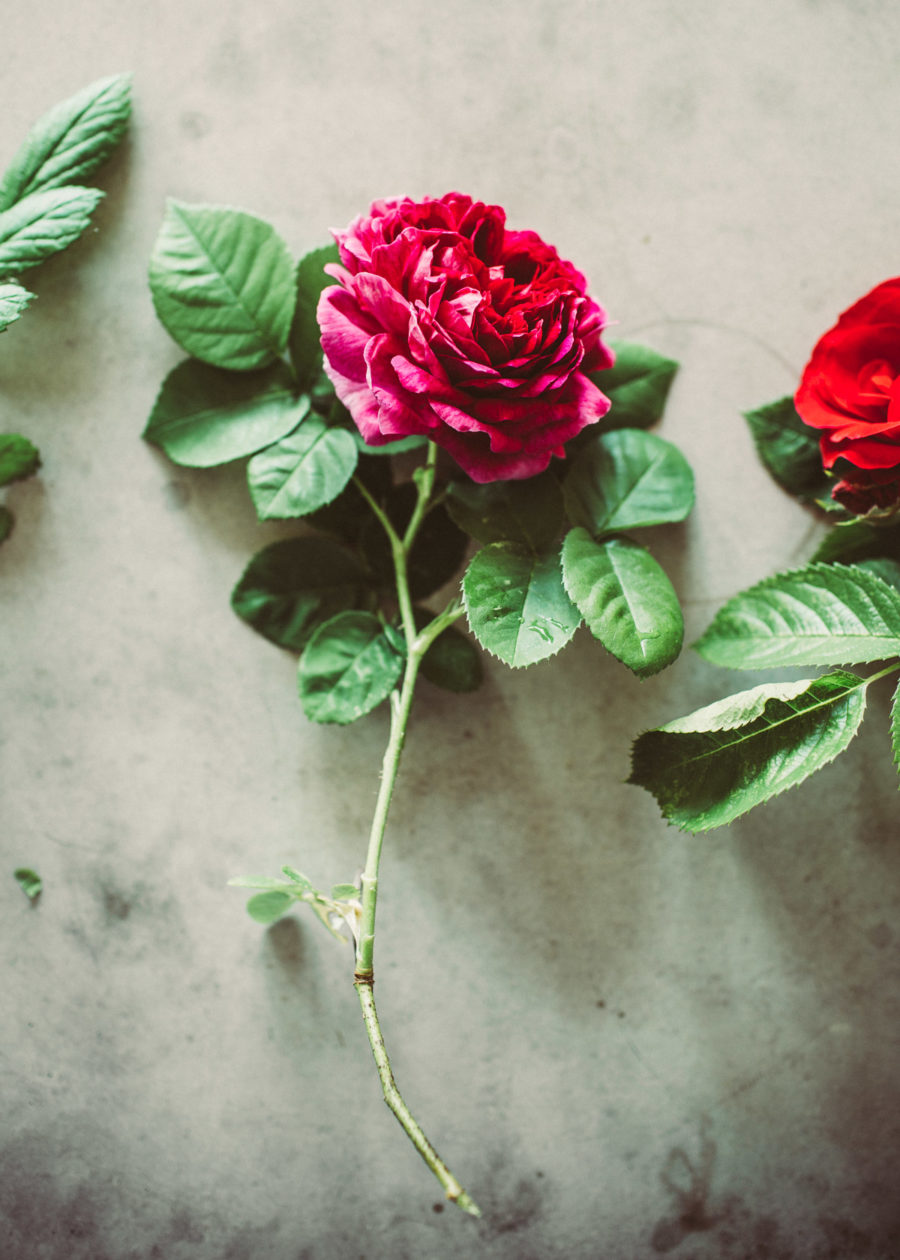 rose__Lagerqvist-0365