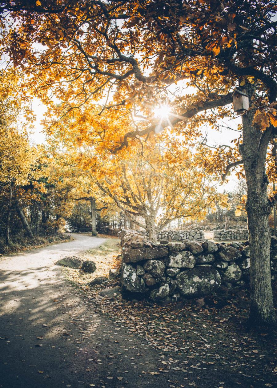 autumn_kristin_Lagerqvist-2
