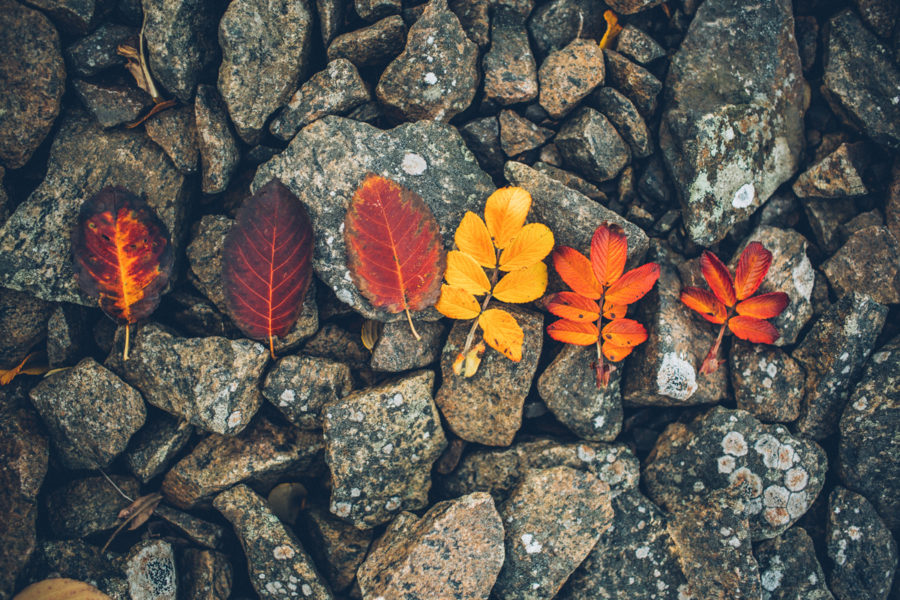 autumn_kristin_Lagerqvist-6