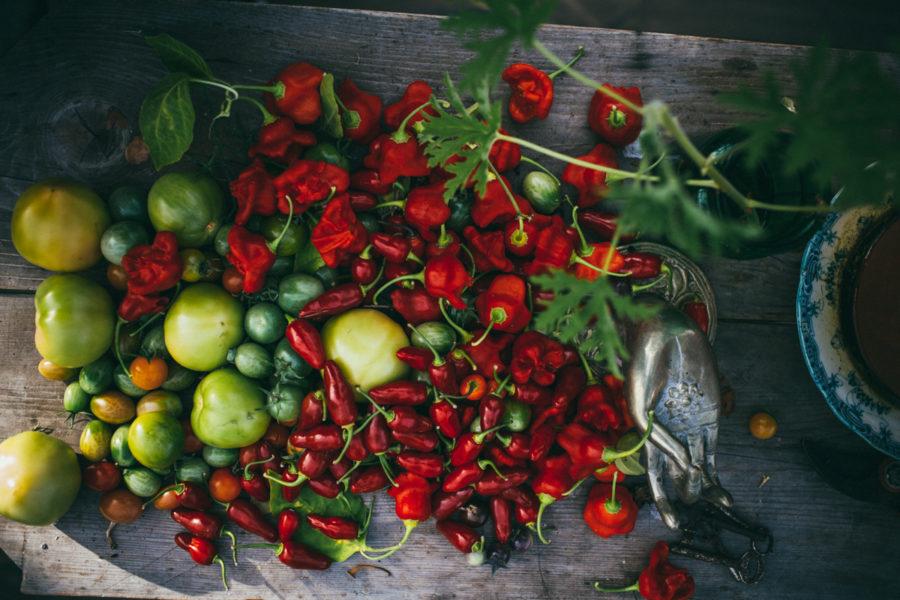 tomat_kristin_Lagerqvist