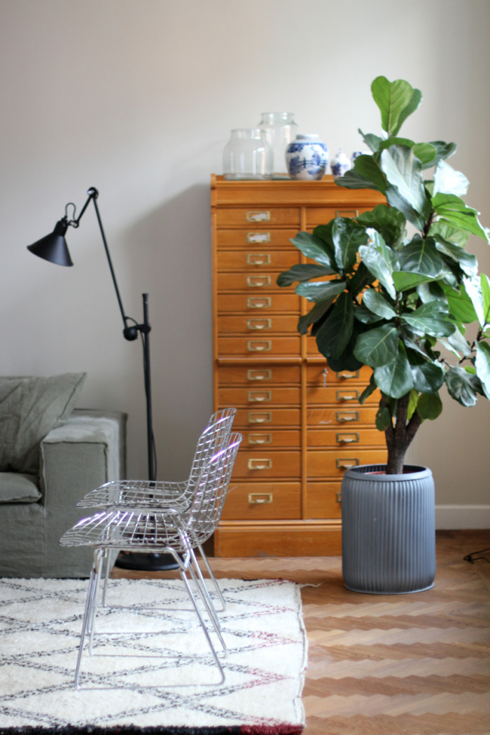 seventeendoorsplant-700x1050