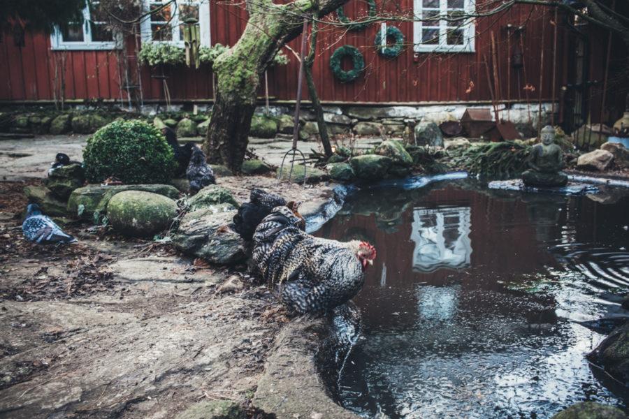 Morgon_Hakesgard_Kristin_Lagerqvist-16