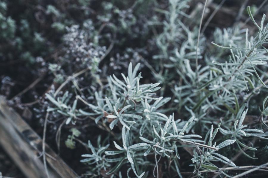 garden house winter_krickelin_Kristin_Lagerqvist-2