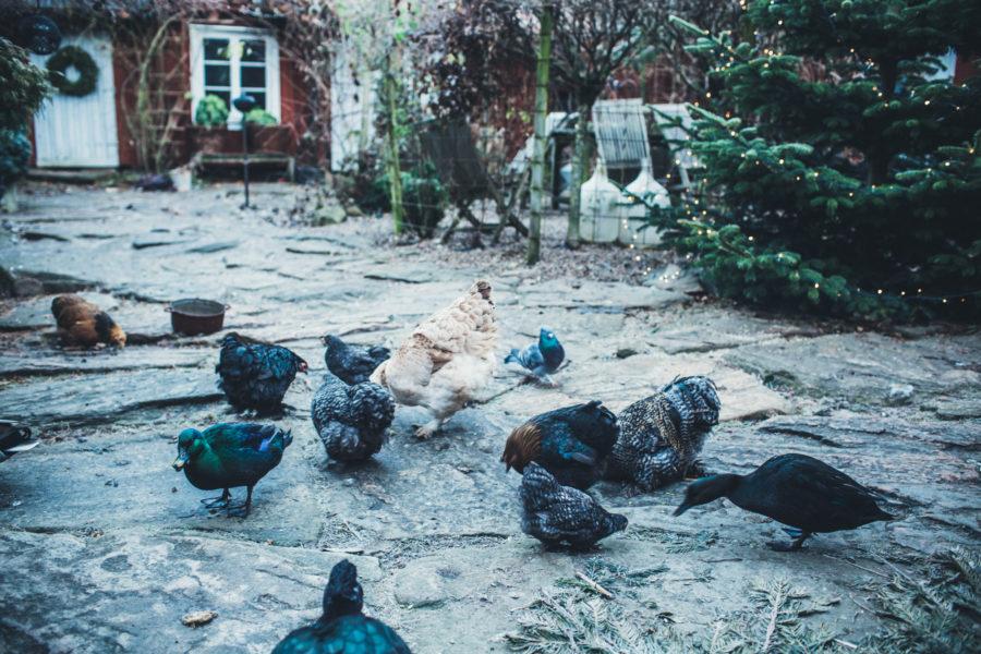 marie_birds_Kristin_Lagerqvist-3