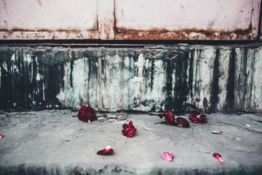 roses_Kristin_Lagerqvist