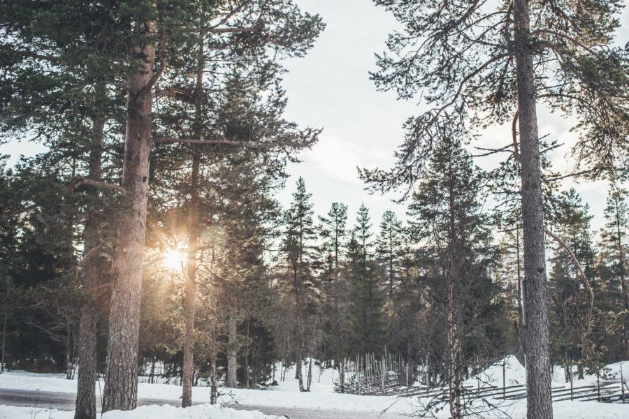 ski_Kristin_Lagerqvist-5