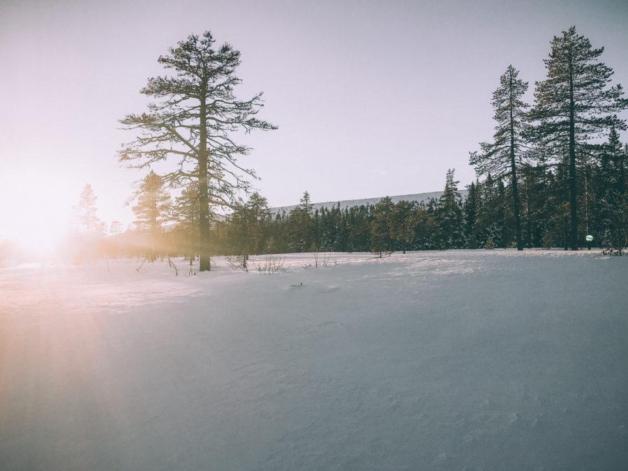 karin_Kristin_Lagerqvist-5