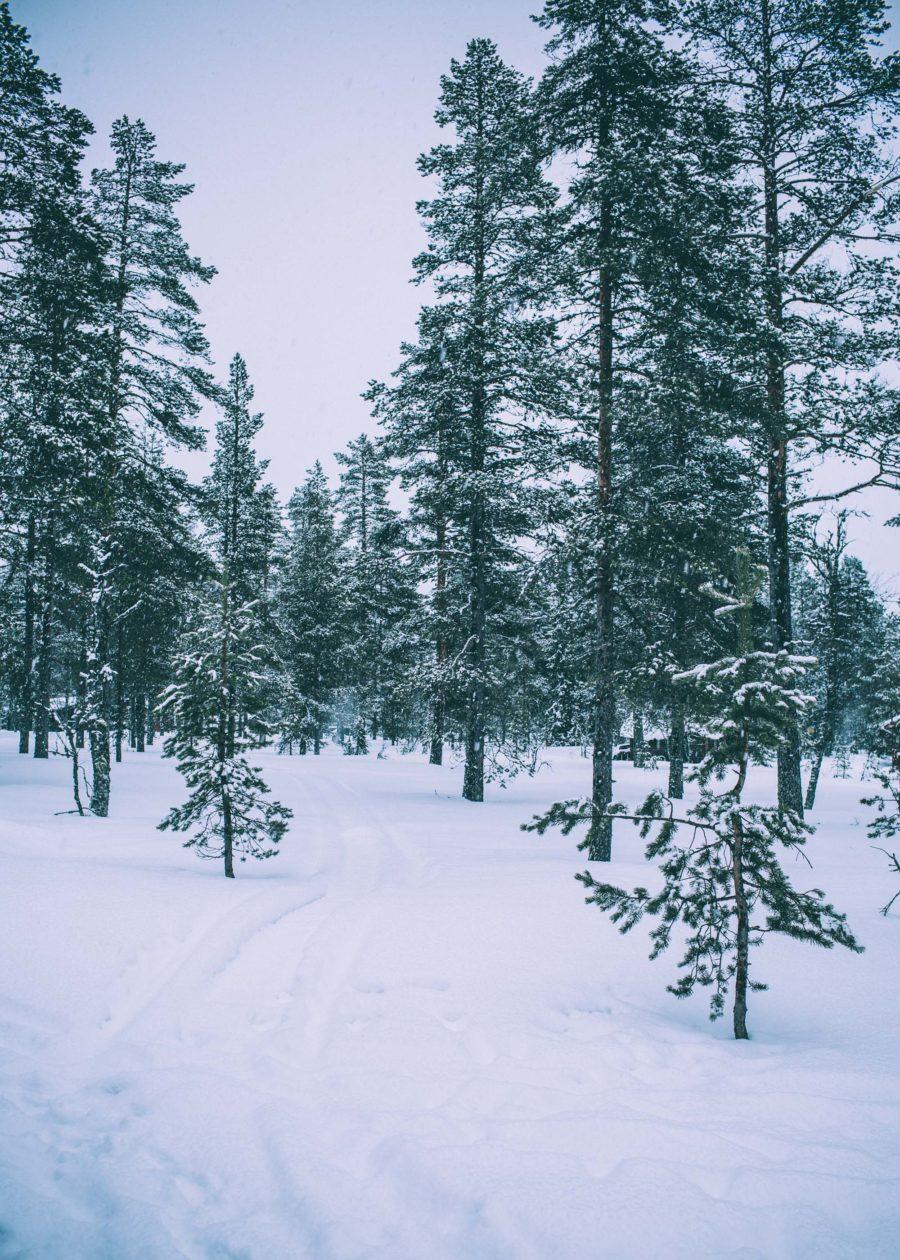 ski_Kristin_Lagerqvist-7